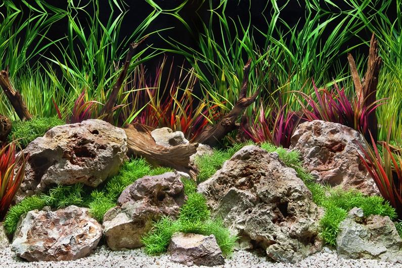 Unduh 470 Koleksi Background Untuk Aquarium HD Gratis